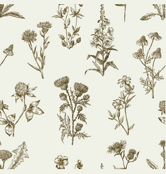 Sketches of the wildflowers vector