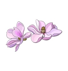 Two pink magnolia flowers sketch vector