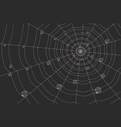 dew on a grid of concentric cobweb on black vector image