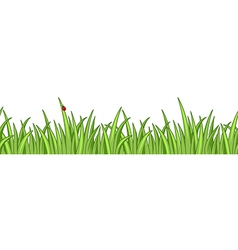 Grass isolated vector