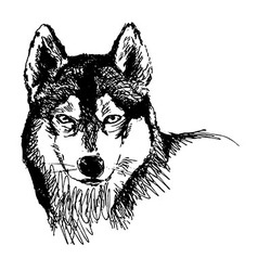 Hand sketch head husky vector