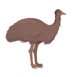 ostrich emu isolate on a white background vector image