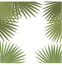 palm leaves frame on white background tropical vector image