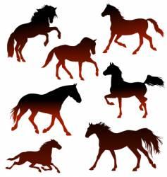stallions vector image