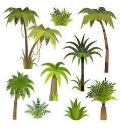 cartoon palm tree jungle palm trees with green vector image