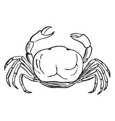 Oyster crab vintage vector