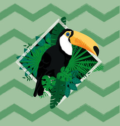 tucan exotic bird vector image