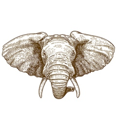 engraving elephant head vector image vector image