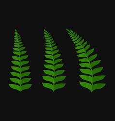 green fern leaf set vector image vector image