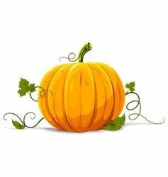 pumpkin vegetable fruit isolated vector image vector image