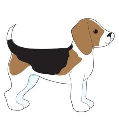 Beagle vector image vector image