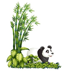 cartoon panda hiding vector image