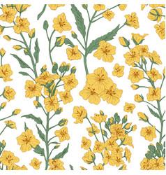elegant seamless pattern rapeseed plant or vector image