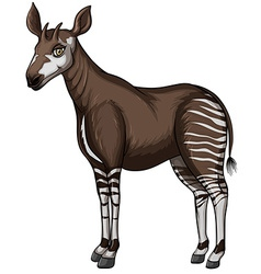 Okapi vector