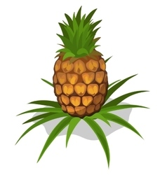 Ripe pineapple icon tropical fruit vector image