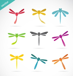 group of colorful dragonfly vector image