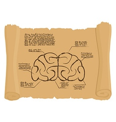 Brain of old scroll Drawing Old brain Diagram vector image