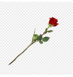 highly detailed flower of red rose on long stem vector image
