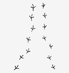 Trail of birds vector