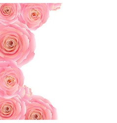 Pink Rose Border vector image vector image