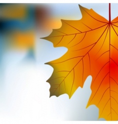 red yellow maple autumnal background vector image