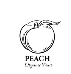 hand drawn peach icon vector image
