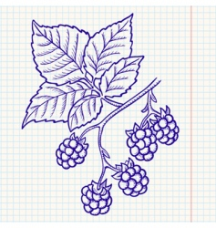 blackberry vector image