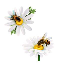 Honey bees sitting on daisy flowers vector