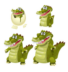 stages growth and maturation crocodiles vector image