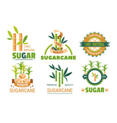 Sugar cane isolated icons plant and sweetener vector