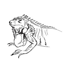 Hand sketch of iguana vector