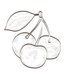 isolated cherries outline vector image
