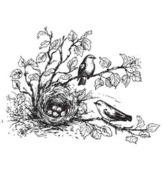 Songbirds and nest sketch vector