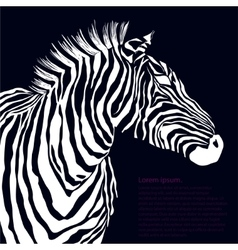 Animal white silhouette zebra vector image