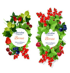 natural garden berries banners vector image