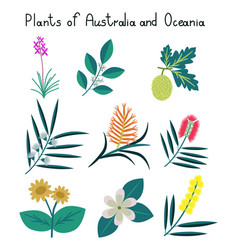 Plants of australia and oceania vector