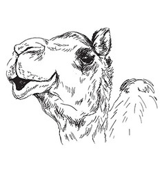 Hand sketch of the head of a camel vector image