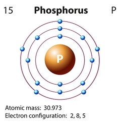 Diagram representation of the element phosphorus vector image vector image