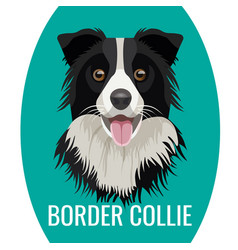 border collie pet isolated on white vector image