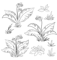Flowers and grass set contours vector