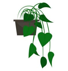 Green indoor plant vegetation in pot houseplant vector