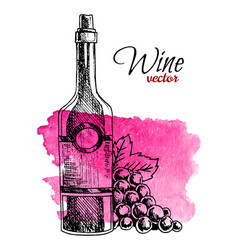hand drawn bottle wine and grape on watercolor vector image