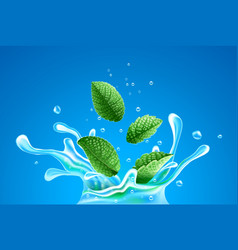 Water splash with green mint vector