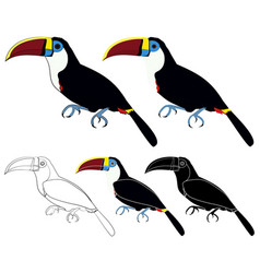 White throated toucan bird colored vector