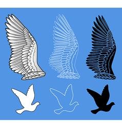 Dove bird wings set vector