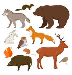 Forrest wild animals collection vector