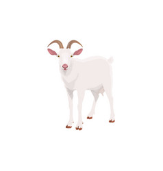 Goat farm animal cattle icon livestock and meat vector