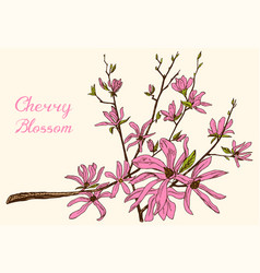 japanese sakura blooming cherry magnolia or vector image