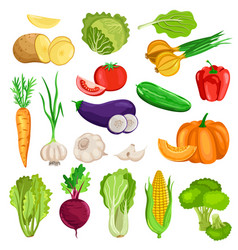vegetables isolated on white background vector image