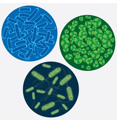 viruses vector image vector image